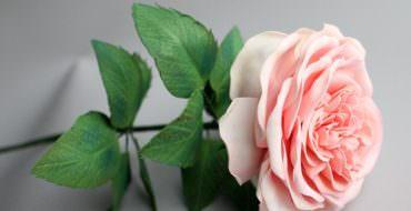 Розы из фоамирана, фото