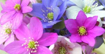 Цветок перелеска из фоамирана, фото