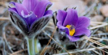 Цветы из фоамирана, мастер-классы
