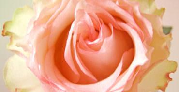 Заколка роза из фоамирана: мастер-класс с фото