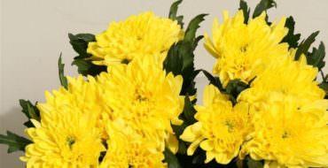 Желтая хризантема из фоамирана, МК, фото