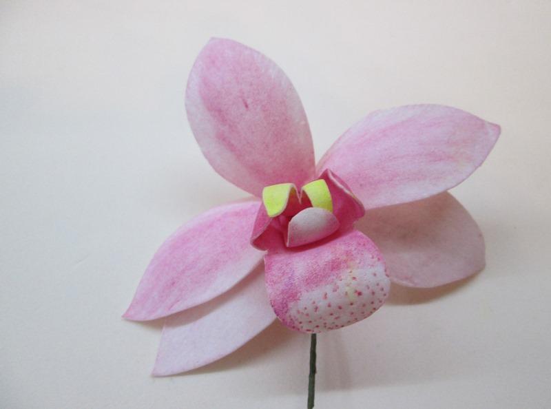 Орхидея цимбидиум, фото