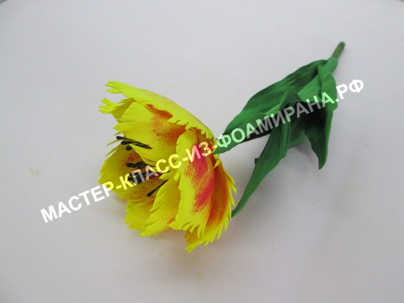 мастер - класс махровый тюльпан из фоамирана