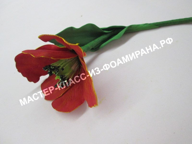 мастер -класс тюльпан из фоамирана.