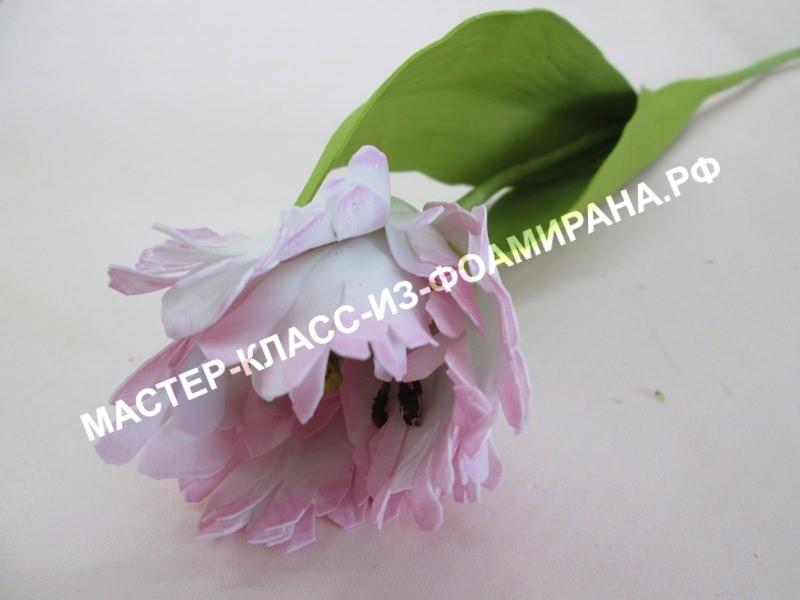 мастер-класс попугайный тюльпан из шелкового фоамирана.