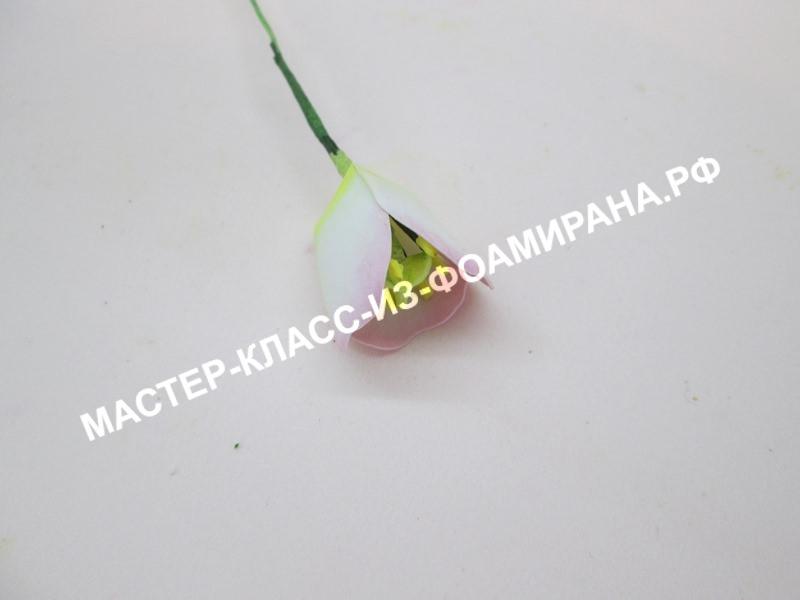 формирование тюльпана
