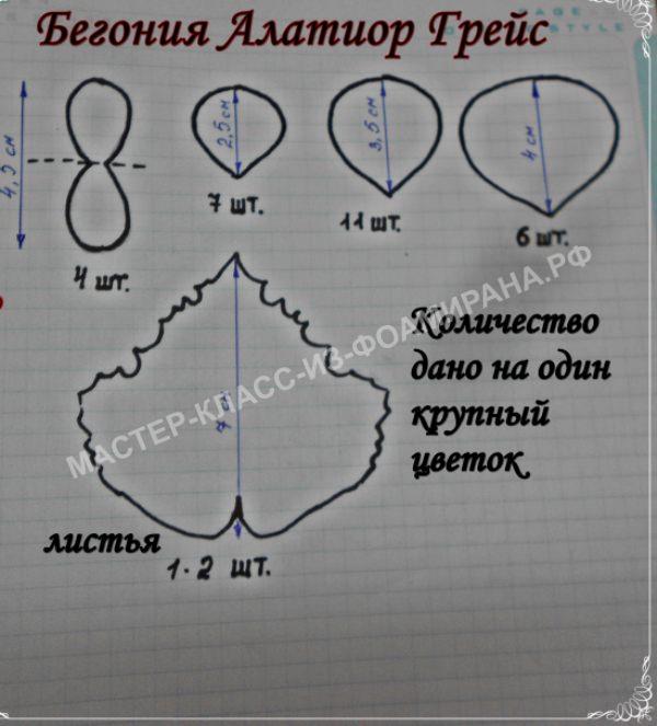 схема для изготовления бегонии