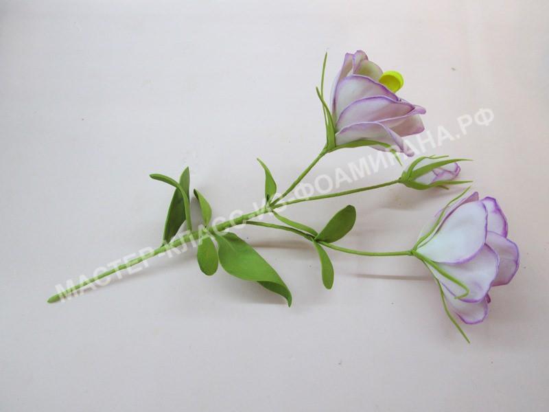 формирования цветка эустомы