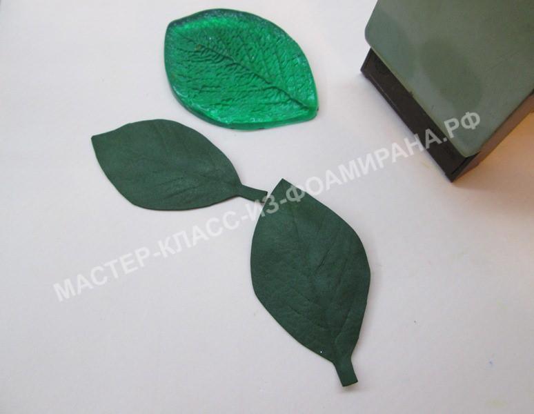 формирование листьев