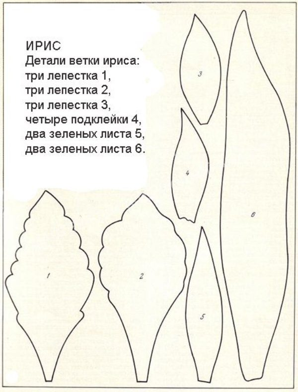 Выкройка ветки ириса из фоамирана