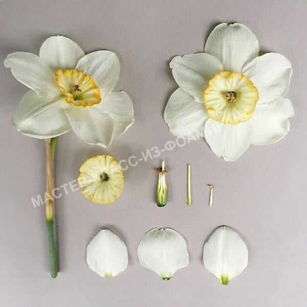 выкройка нарцисса с живого цветка
