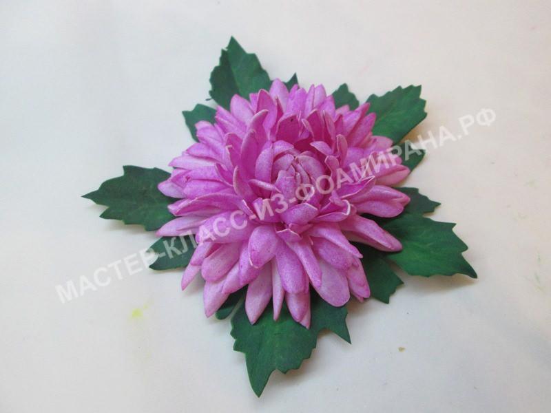 фото хризантемы
