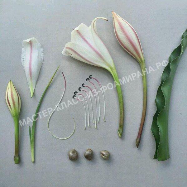 выкройка на основе живого цветка