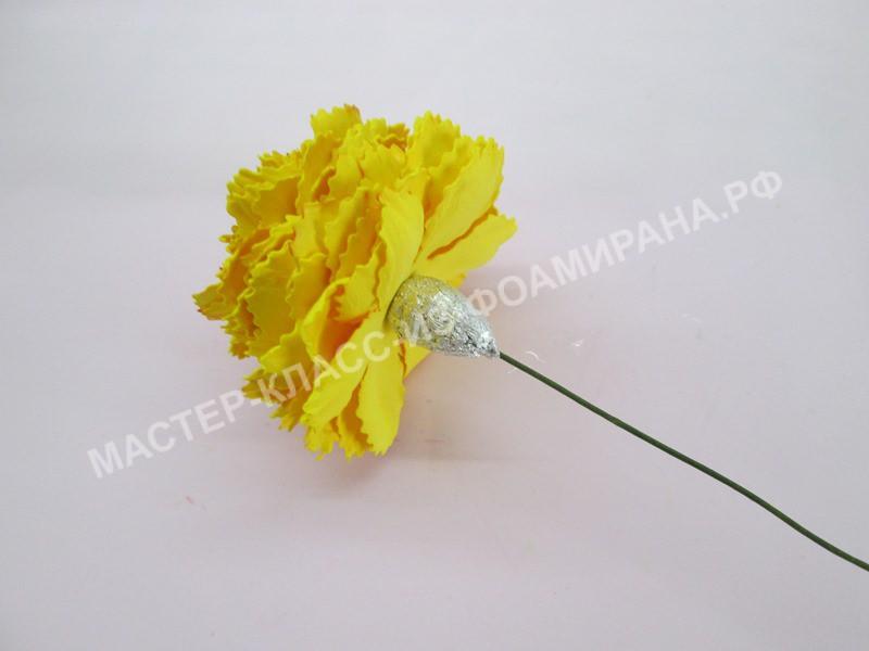формирование цветоложи цветка