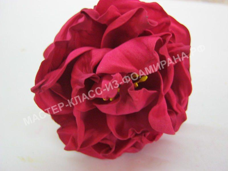 распустившийся розан
