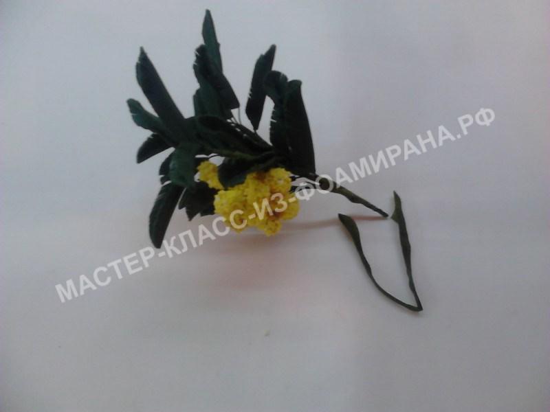 сборка веточки листьев и цветочков мимозы