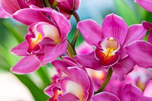 Тест: Угадайте, какой из этих цветов лишний