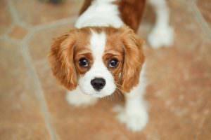 Тест: Вы знаете породы собак?
