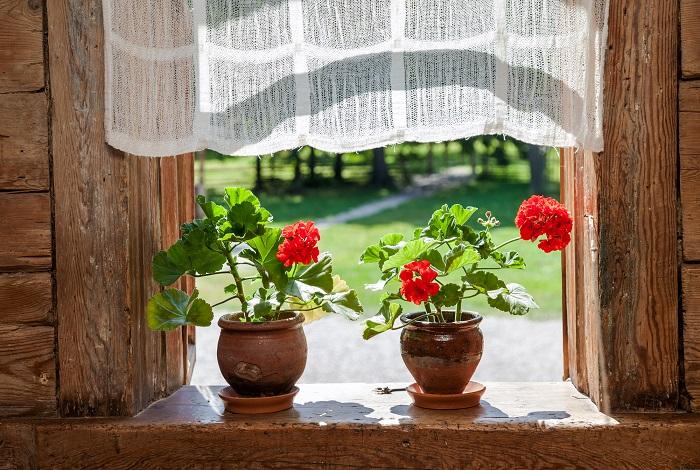 Самые ароматные: Какие растения выбрать для дома