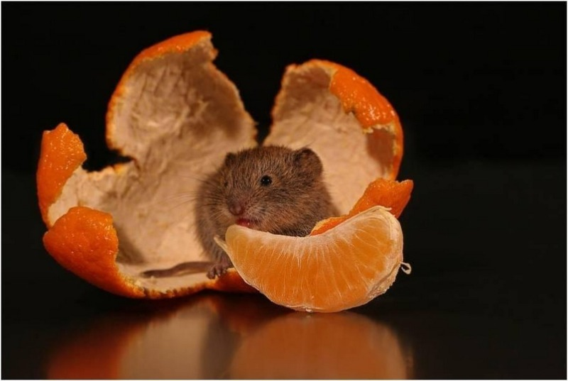 Притягиваем удачу и благополучие: 6 простых идей создания мышек на Новый год