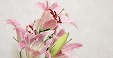 Лилия из фоамирана: мастер-класс бутон и веточка лилии