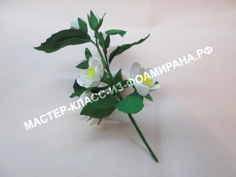 Цветок жасмина в руке