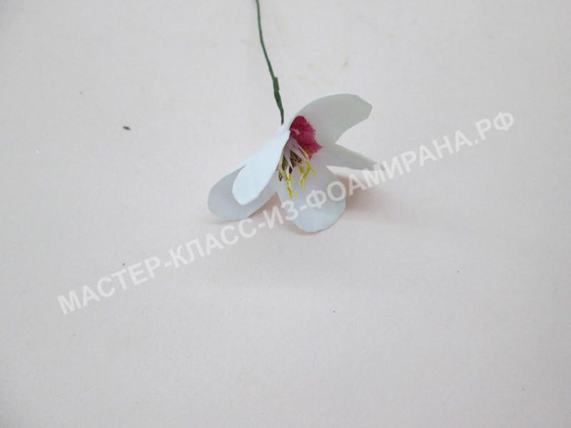 формирование цветка вишни