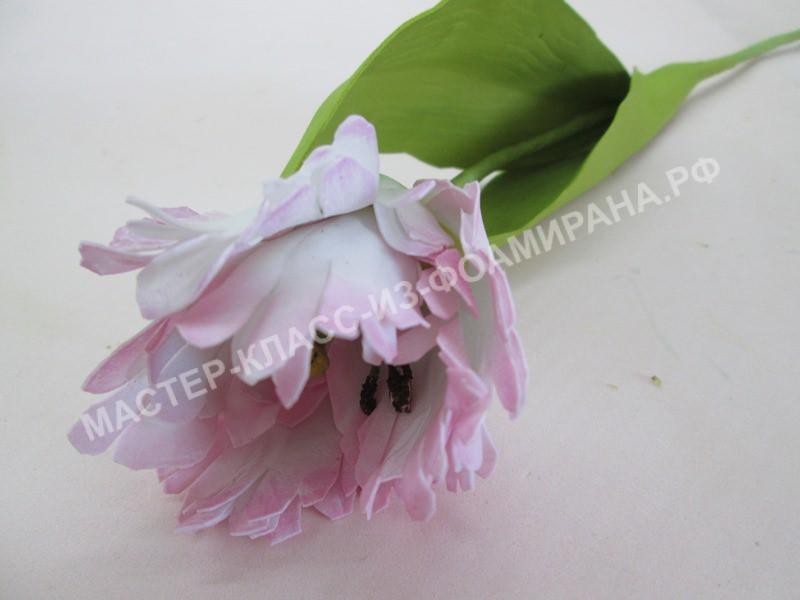 фото махрового тюльпана