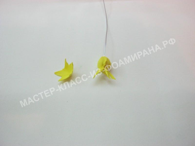 формирование тычинок цветка льна