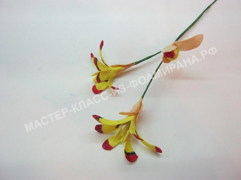 формирование веточки цветочков спераксиса