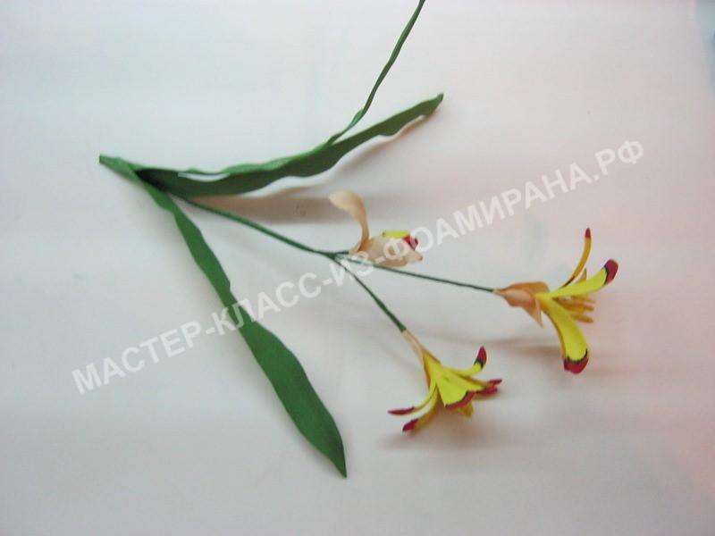 прикрепление листочков цветочков Спераксиса
